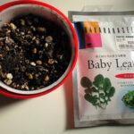 ルッコラの種 Baby Leaf