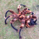 これは驚ろく!Spider Dog  @sawardega の超ワルのり動画