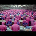 大量生産の肉が食べられなくなる映像「SAMSARA」
