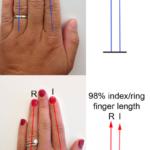 薬指が長いか?人差し指が長いか?でわかる男女の性能「二本指の法則―あなたの健康状態から○○○までを語る秘密の数字 」