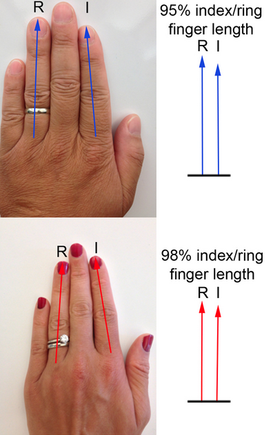 Index To Ring Finger Ratio Homosexuality In Japan Babesmachine 1
