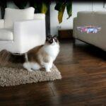 Drone vs Cats ドローンと猫の果てしなき戦い(笑)