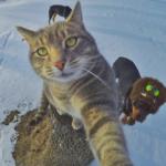 自撮りネコのインスタグラム