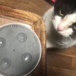Alexa vs Cat